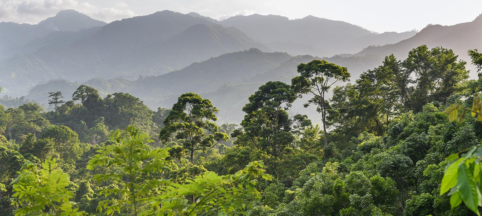 Regenwald in Honduras